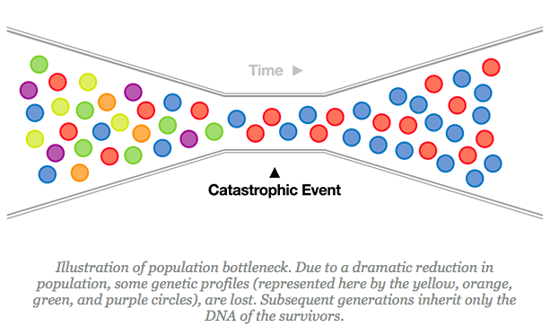 Description: Illustration of population bottleneck